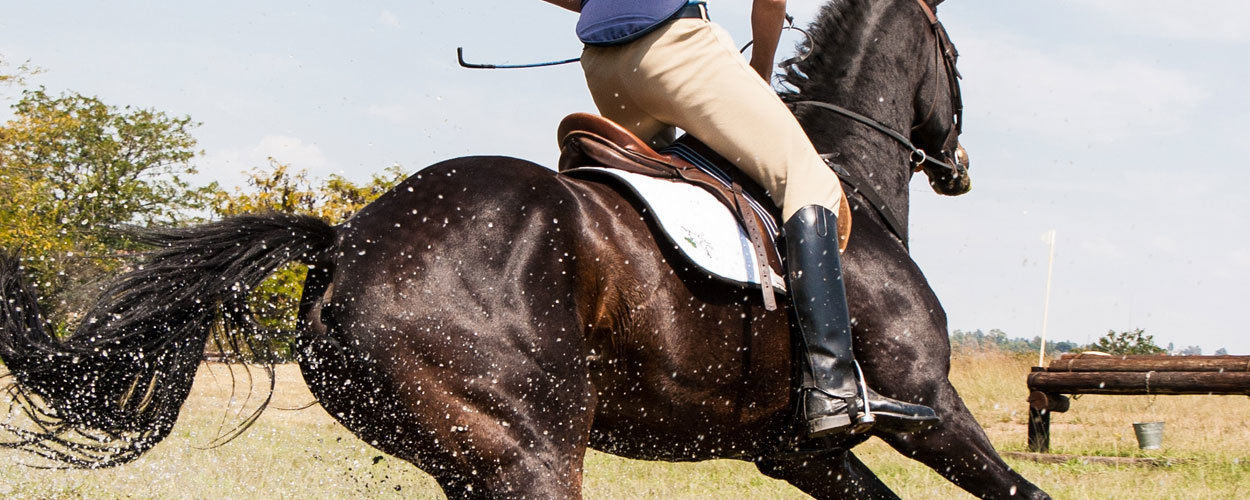 Research Study: Inflammation In The Hocks Of Horses