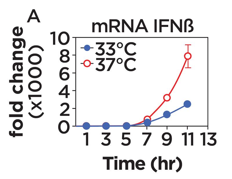 Fold Change mRNA